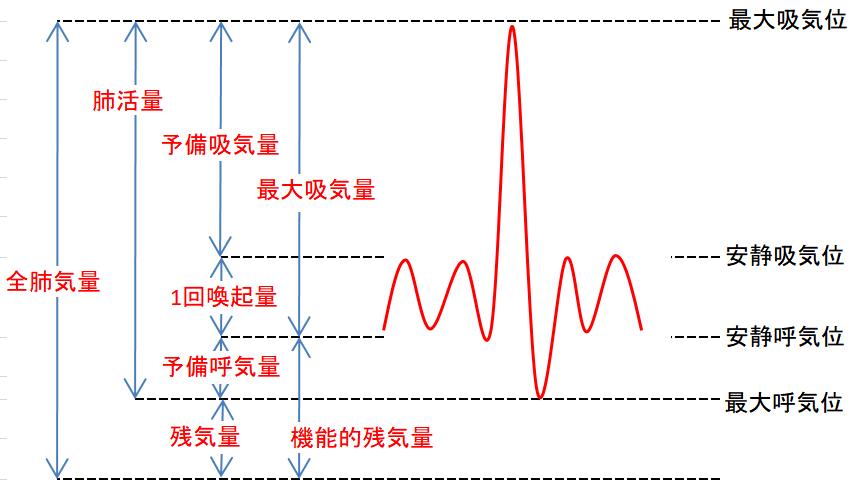 肺気量分画の画像