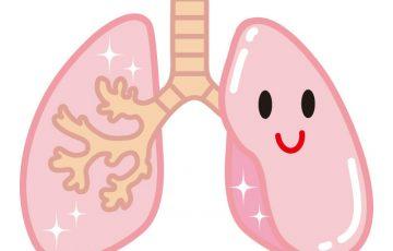 気管支のイラスト