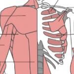呼吸の補助筋