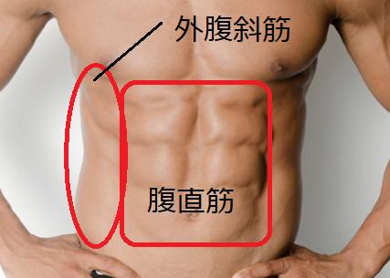 腹直筋と外腹斜筋の画像