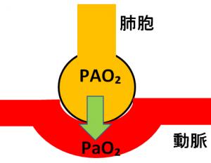 肺胞気酸素分圧