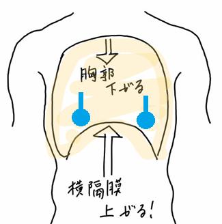 呼気時の胸腔イラスト