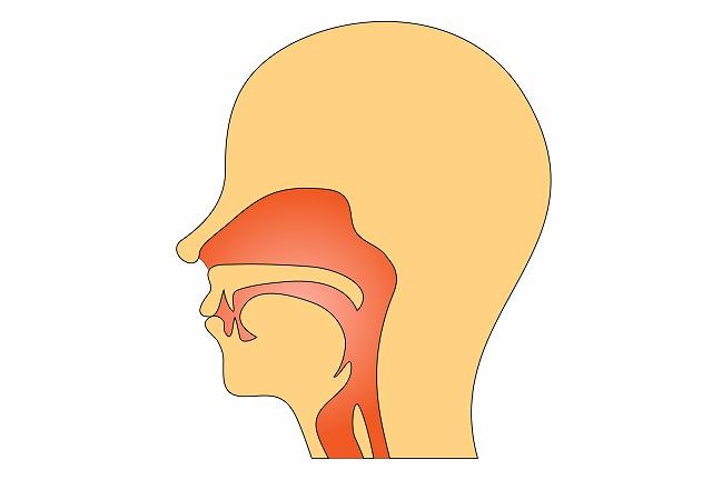 咽頭のイラスト