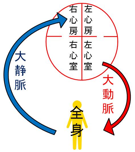 大循環のイラスト