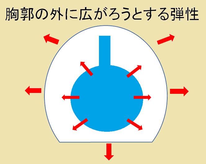 胸郭の弾性