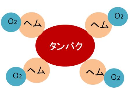 ヘモグロビンのイメージ図