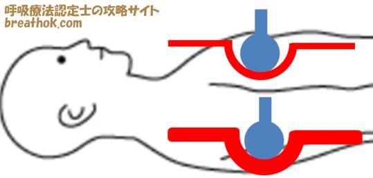 臥位の腹部と背部の血流の違い画像