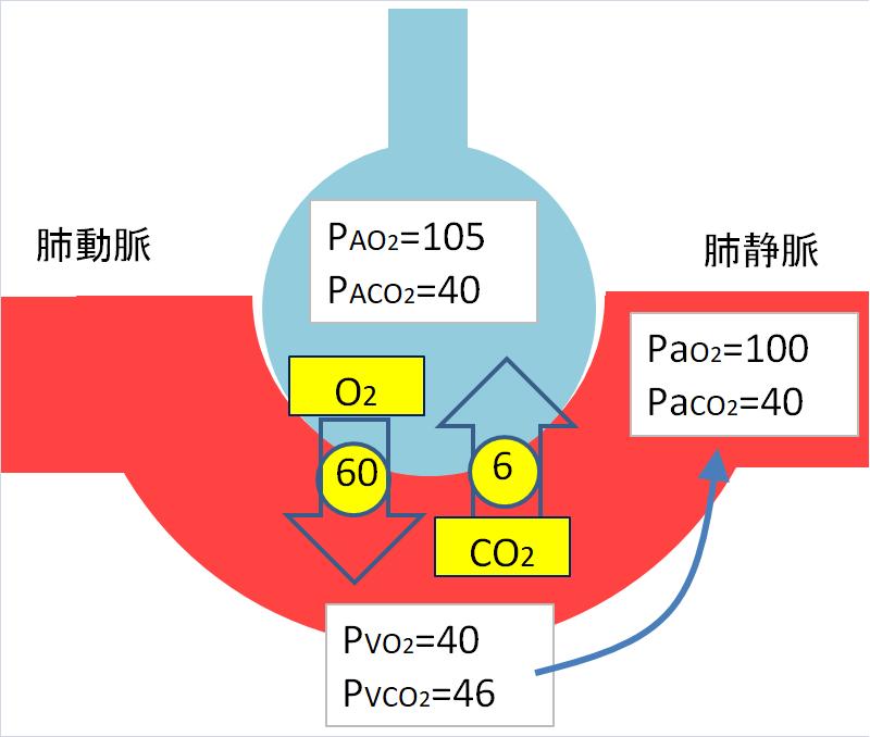 肺胞での拡散の説明画像