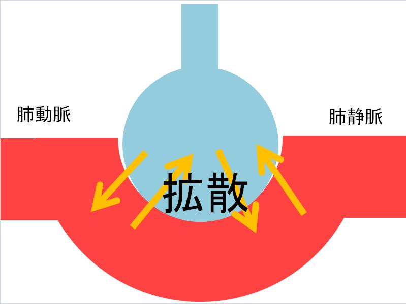 肺胞の拡散の画像