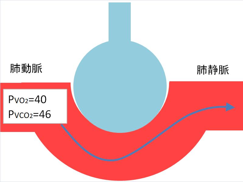 肺動脈の酸素と二酸化炭素分圧の画像
