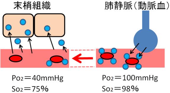 ヘモグロビンの酸素運搬画像